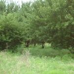 Walker Ranch (17).JPG