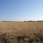 40 Acres on Lane Rd- Fredonia