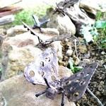 mariposas de jardin