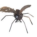spider  evolution