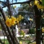 Kwan_yin_flowers