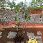 Construction_kafs_16_feb_sam_ambler__3_