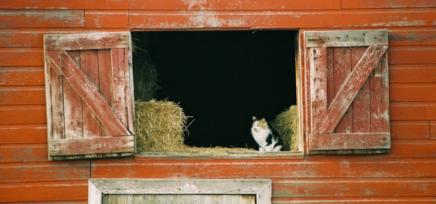 cat in barn.jpg