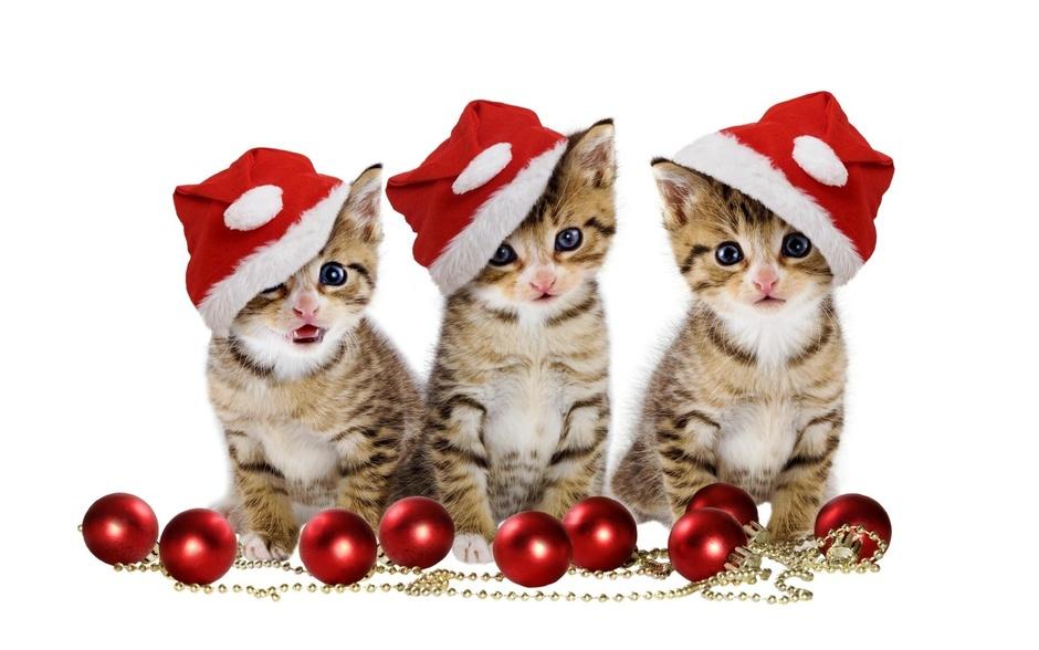 christmas-kittens.jpg