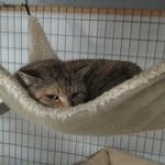 Barn cats need homes too