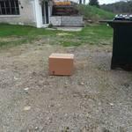 Seeking Information on Abandoned Cat