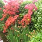 Luanne_garden_n_pond