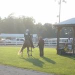 2013 Horse Show
