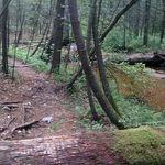Iron Run Trail 2