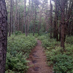 Iron Run trail 1
