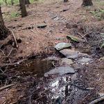 Wet Creek along trail