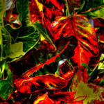 Croton Details