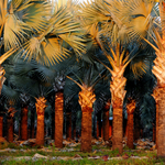 Redland Tree Nursery