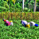 The Field Workers