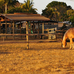 Redland Ranch in Late Afternoon