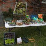 Creative/Vertical Gardening Class