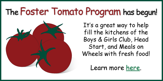 foster-tomato.png