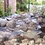 Discovery_garden_pond_17_jun_09_021