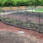 Plantedbeds2011