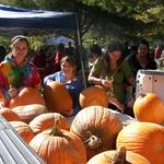Lots of Pumpkins!
