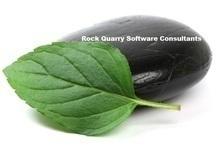 RQSC_logo1.jpg
