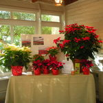 Educational Exhibit on Poinsettias