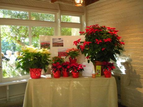 Educational Exhibit on Poinsettias