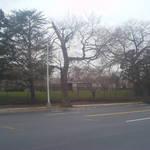 Graveyard Across the Street