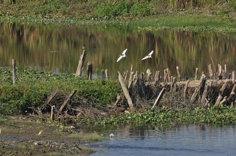 Birds at Kaziranga