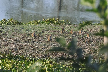Monkeys at Kaziranga