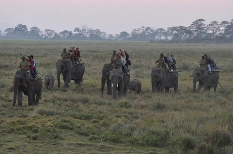 Elephant Safari at Kaziranga