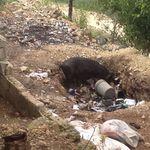 Haiti_04_2012_1058