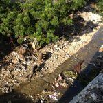 Haiti_nov._2012_130