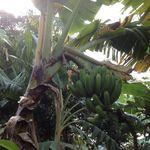 Haiti_nov._2012_394
