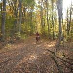 Autumn trail ride