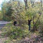 Volunteers clearing brush around Parking Lot 7