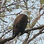 Eagle2006-1