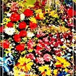 Monet's Favor