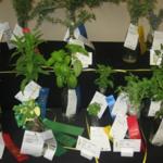 Youth_gardening_-_plants