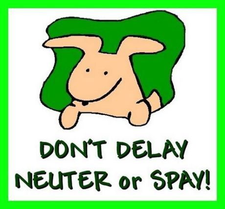 dont_delay_neuter.jpg