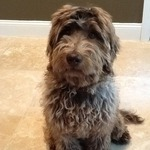 The first time our dog, Piper, worked with Linda we saw an immediate improvement in her ability to follow direction. Not only did Linda wor...