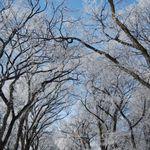 hoar_frost_on_a_clear_day.jpg