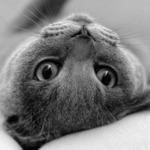 catbw.jpg