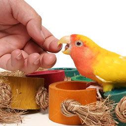 lovebird-bite.jpg