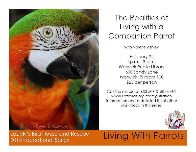 EDUCATION SERIES - Rhode Island Parrot Rescue