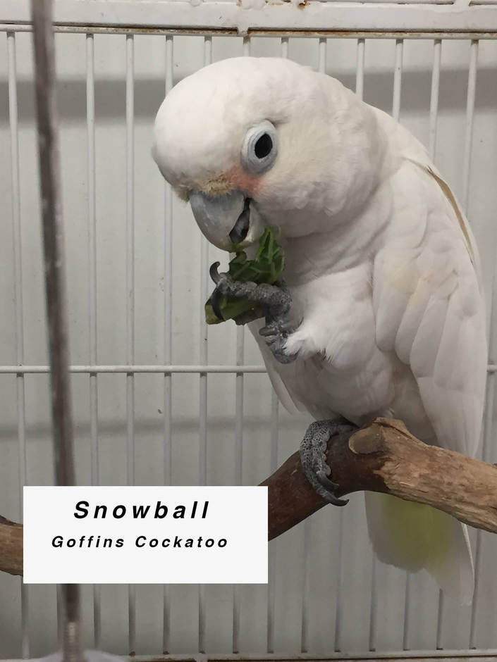 Sponsor Snowball