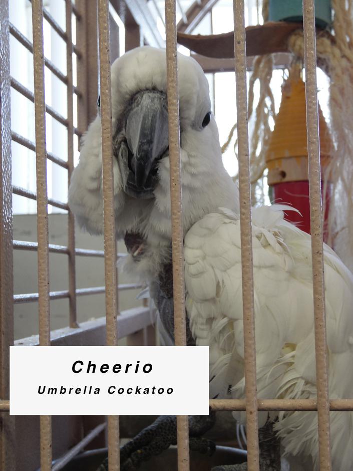 Sponsor Cheerio