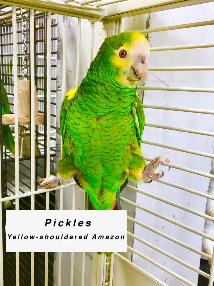 Sponsor Pickles