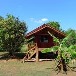 Teak bungalow surrounded by mango and banana tree