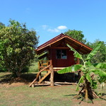 Teak bungalow surrounded by mango and banana tree
